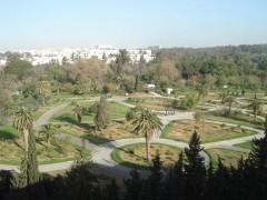 Vue de l'hôtel sur le parc du Belvédère à Tunis