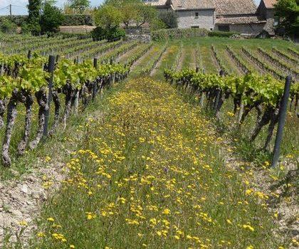 Une rentrée dans les vignes
